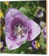 Tulip Lavender Wood Print