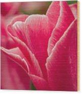 Tulip Layers Wood Print