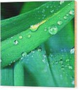 Tulip Leaf Droplets-2 Wood Print