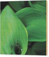 Tulip Leaves-1 Wood Print