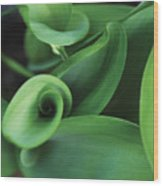 Tulip Leaves Wood Print