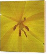 Tulip Light Wood Print