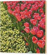 Tulip Line Wood Print
