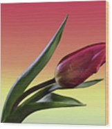 Tulip Love Wood Print