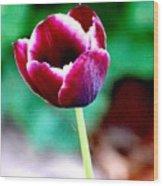 Tulip Me  Wood Print