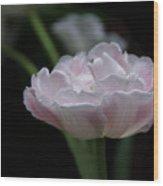 Tulip Mistique Wood Print