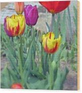 Tulip Mixture Wood Print