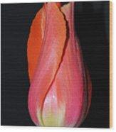Tulip Model Nr. 1 Wood Print