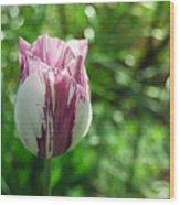 Tulip Morn Wood Print