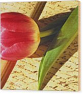 Tulip On An Open Antique Book Wood Print