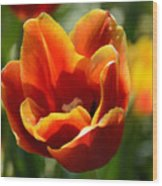 Tulip On Fire Wood Print