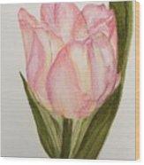 Tulip Watercolor Painting -triumph Tulip Wood Print