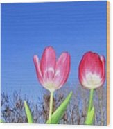Tulip Panorama Wood Print