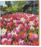 Tulip Parade Wood Print