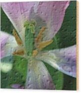 Tulip Passing Beauty Wood Print