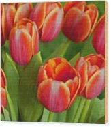 Tulip Patch Wood Print