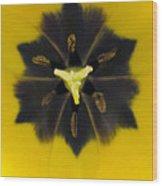 Tulip Pixie Wood Print