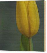 Tulip Portrait Wood Print