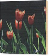 Tulip Red Flair Wood Print