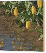 Tulip Reflections Wood Print