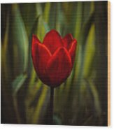 Tulip Wood Print by Rod Sterling