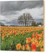 Tulip Rows Wood Print