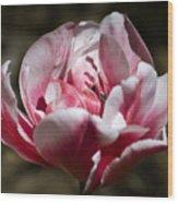 Tulip Surprise Wood Print