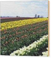 Tulip Town 11 Wood Print