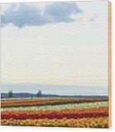 Tulip Town 13 Wood Print
