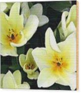 Tulip Town 16 Wood Print