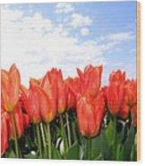 Tulip Town 17 Wood Print