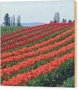 Tulip Town 18 Wood Print