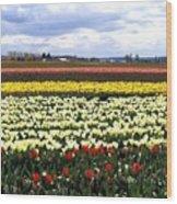 Tulip Town 4 Wood Print