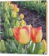 Tulip Town 6 Wood Print