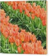 Tulip Town 7 Wood Print