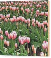 Tulip Town 8 Wood Print