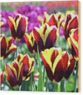 Tulip Treasures Wood Print