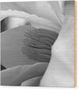 Tulip Tree Bloom Wood Print