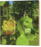 Tulip Tree Wood Print