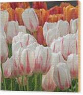 Tulip Wave Wood Print