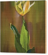 Tulip White Yellow Petals #h5 Wood Print