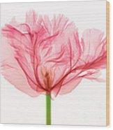 Tulip, X-ray Wood Print