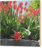 Tulipes Tulipe Wood Print