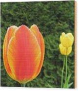Tulipfest 4 Wood Print