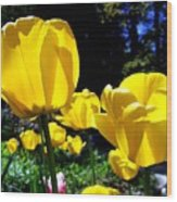 Tulipfest 5 Wood Print