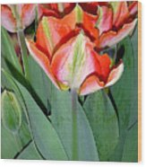 Tulips - A Bunch Of Beauties Wood Print