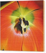 Tulips - An Inside Look Wood Print