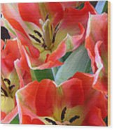 Tulips - Competing For Attention Wood Print