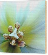 Tulips #12 Wood Print