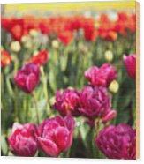 Tulips 2 Wood Print